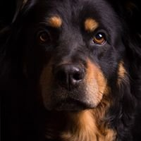 Tierfotografie Hafner