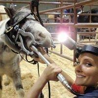 Lucy Watson Equine Dentist