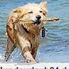 Urlaub mit dem Haustier - www.hundeurlaub24.de -