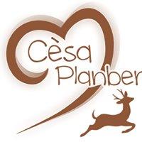 Garnì B&B Cèsa Planber, Canazei, Val di Fassa, Dolomiti