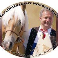 Haflingerzucht Norbert Rier Zwei