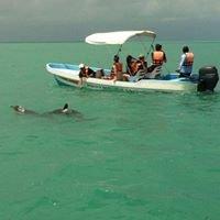 Wild Dolphins Tour