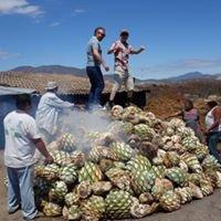 Mezcal Educational Tours of Oaxaca