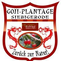 Goji & Aronia Plantage Siebigerode