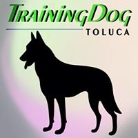 Training DOG Toluca