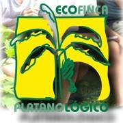 Ecofinca Platanológico