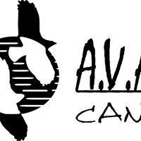 Avafes Canarias