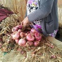 Mercado del Agricultor de Buenavista del Norte