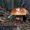 Hríby krásy z lesa