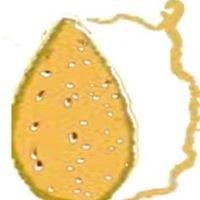 Asociación Almendra de Gran Canaria