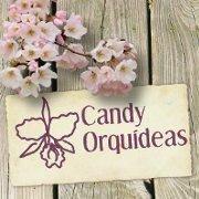 Viveros Candy Orquídeas