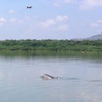 Refugio de Vida Silvestre Islas Corazón Y Fragata