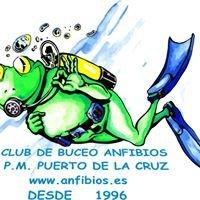 Anfibios Buceo