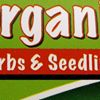 Organic Herbs & Seedlings