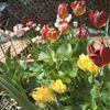 Yellowstone County Master Gardener Association