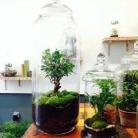 Atelier Green Factory