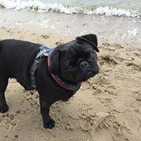 Urlaub mit Hund an der Nordsee -Das Original seit 2001-