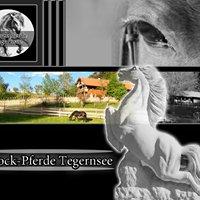 Barockpferde Tegernsee