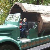 Ancient Redwoods RV Park