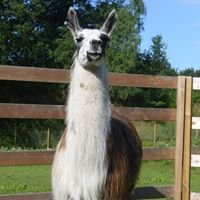 Lama to go