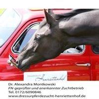 Dressurpferdezucht Henriettenhof