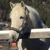wild horse bormio