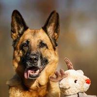 Dog Luxury - Hunde Concept Store