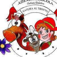 Azienda Agricola & Fattoria Didattica Natura al Trotto