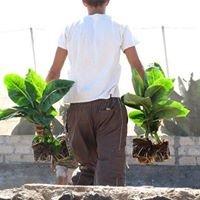 Finca Las Damas - Alojamiento en el medio rural - Tenerife - Islas Canarias