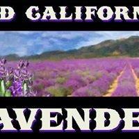 Old California Lavender