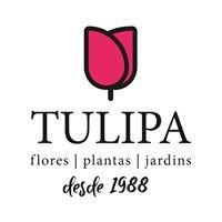 A Tulipa