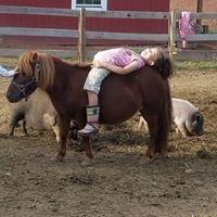 Big D's Pony Rides LLC