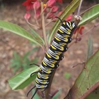 Hollie's Farm & Garden