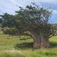 Baobab Tour Lda