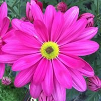 Brouwer's Flowers