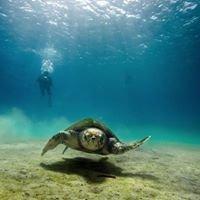 Lampedusa Turtle Group