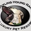 Chuckling Hound Ranch Luxury Pet Resort