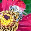 East Richmond Beekeepers Association
