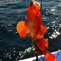 Fishermen's Catch