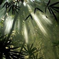 Bamboo Landscape Plants
