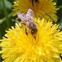 Moling Honig