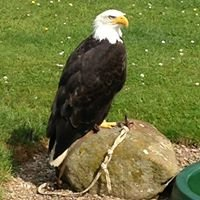 North East Falconry Centre