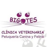 Clinica Veterinaria Bigotes