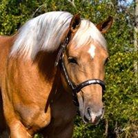 Duchesne Performance Horses- Reining Horses
