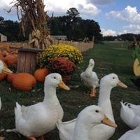 Calie's Acre - Pumpkin Patch/Weddings/Event Venue