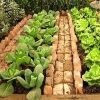 Agricultura biologica e jardinagem