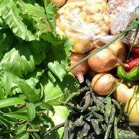 Agricultura Biológica Quinta da Seara