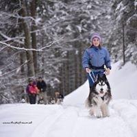 Huskytraum - Wanderungen im Salzkammergut