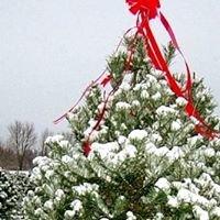 Becks Christmas Tree Farm