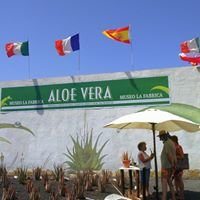 Aloe Vera Museo - La Oliva